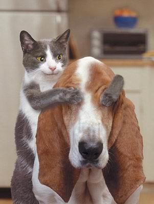 Котошоп часть 2. смешных котят.